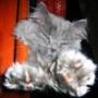 Бесплатная ава из категории Коты и кошки #3430