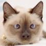 Бесплатная картинка для аватарки из категории Коты и кошки #3431