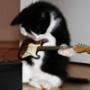 Крута ава из категории Коти та кішки #3441