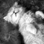 Безкоштовна ава из категории Коти та кішки #3449