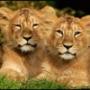 Оригинальная картинка для аватарки из категории Коты и кошки #3454