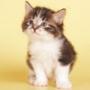 Красивая ава из категории Коты и кошки #3459