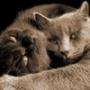 Прикольная картинка для аватарки из категории Коты и кошки #3462