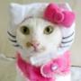 Безкоштовна ава из категории Коти та кішки #3470