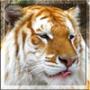 Оригінальна автрака из категории Коти та кішки #3474