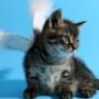 Оригинальная картинка для аватарки из категории Коты и кошки #3476