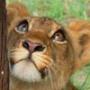 Красивая автрака из категории Коты и кошки #3484