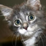 Прикольная картинка для аватарки из категории Коты и кошки #3489