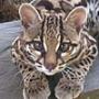 Гарна картинка для аватарки из категории Коти та кішки #3491