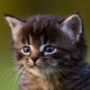 Крутая ава из категории Коты и кошки #3496