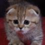 Бесплатная ава из категории Коты и кошки #3497