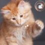 Гарна картинка для аватарки из категории Коти та кішки #3500