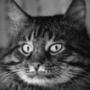 Прикольная автрака из категории Коты и кошки #3502
