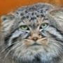Бесплатная картинка для аватарки из категории Коты и кошки #3505