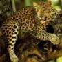 Прикольная ава из категории Коты и кошки #3509