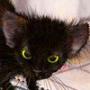 Прикольна ава из категории Коти та кішки #3510