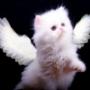 Оригинальная ава из категории Коты и кошки #3514