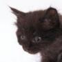 Гарна ава из категории Коти та кішки #3516