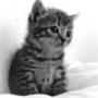 Крутая ава из категории Коты и кошки #3522