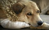 Рада ввела штрафи та тюремні терміни за жорстоке поводження з тваринами