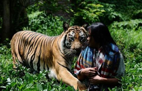 Неймовірна історія дружби тигра і людини (13 фото) (13)