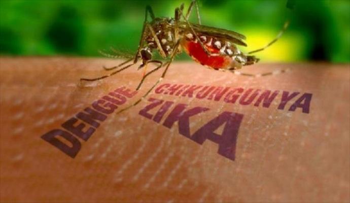 ВОЗ созывает внеочередное заседание из-за вируса Зика