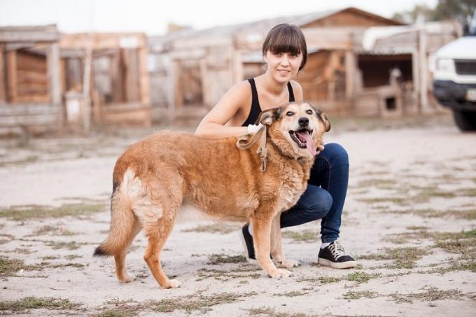 Почему не стоит бояться взять собаку из приюта (1)