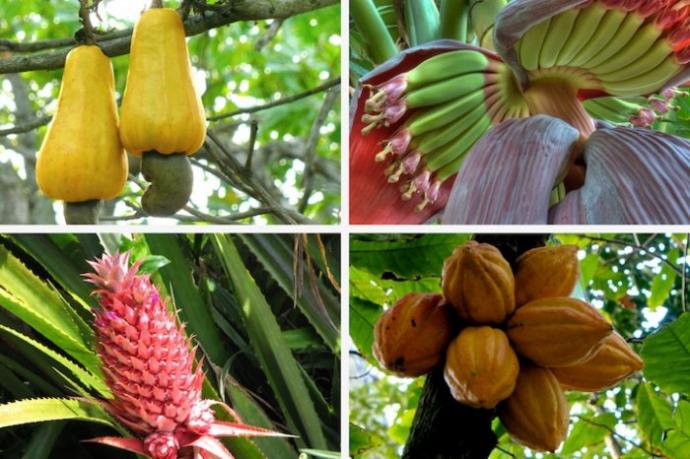 Как растет еда в естественной среде (16 фото)