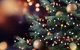 Как выглядит самая большая в мире рождественская елка - впечатляющее фото