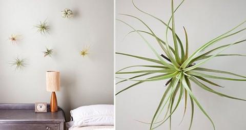 Розовый кактус и еще 12 самых необычных домашних растений (14 фото) (7)