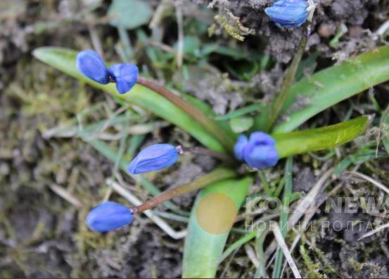 В Украине увидели первые признаки приближения весны: опубликованы фото (3)