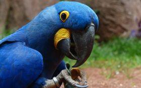 """В природе вымерли редкие голубые попугаи, которые были главными героями мультфильма """"Рио"""""""