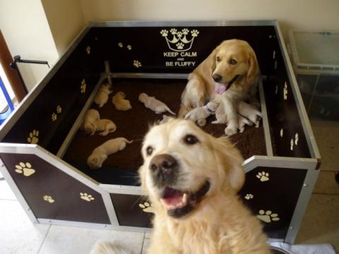 Собаки-мами, які безмірно пишаються своїм потомством (20 фото) (10)