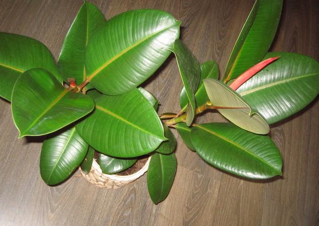ТОП-5 комнатных растений, которые сделают воздух в доме очень чистым (1)
