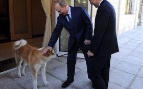 Меняем пса на острова: соцсети насмешил японский подарок Путину