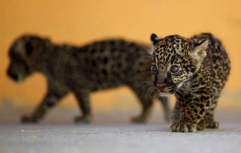 Тварини у фотографіях (20 фото) (19)
