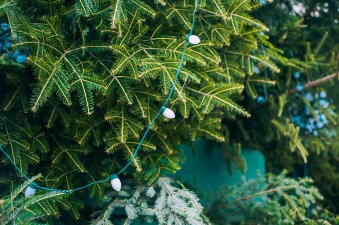 Главная елка страны готова к праздникам: опубликованы новые фото (2)
