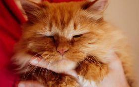 В Новой Зеландии хотят запретить кошек