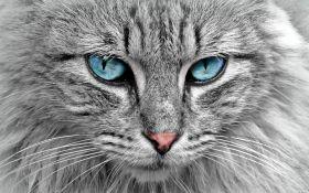 Вчені виявили несподівану небезпеку домашніх кішок
