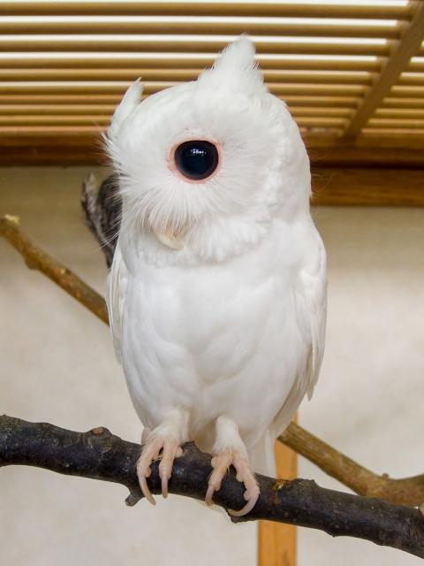 Животные-альбиносы, которым не нужен цвет, чтобы выглядеть потрясающе (16 фото) (5)