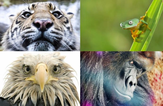 Коли природа дивиться в душу (20 фото)