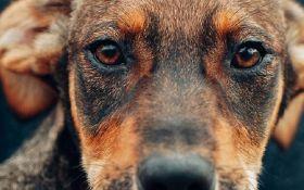 Хорошо, всё - помогаем: в Киеве состоится благотворительный вечер в поддержку бездомных животных