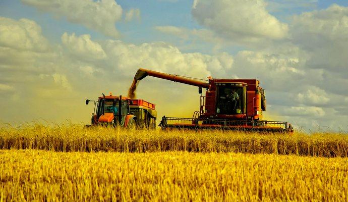 Урожай зерновых снизился более чем на 6% в сравнении с 2014 годом