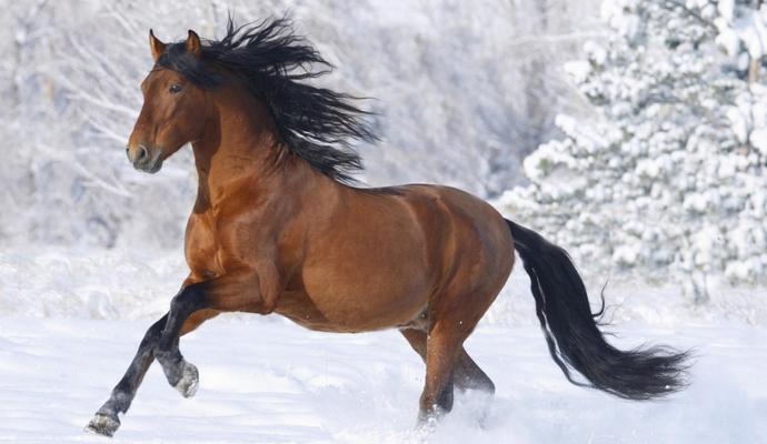 Лошади умеют узнавать человеческие эмоции