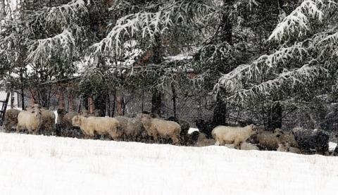 Через сильний снігопад у Польщі загинули двоє осіб (6 фото) (3)