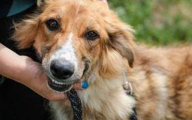 Найди друга: 8 замечательных собачек мечтают найти дом