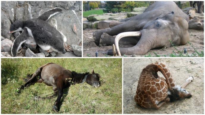 Подборка удивительных фактов о том, как спят животные (10 фото)