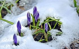 В Киеве из-под снега показались первые подснежники: опубликованы яркие фото