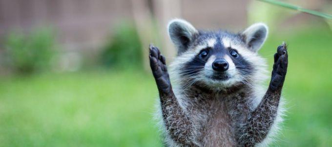 """""""Выйди за меня"""": Всеукраинский марш за права животных"""
