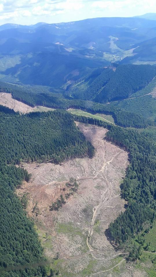 Луценко шокував картиною вирубки лісу в Карпатах: опубліковано вражаючі фото (1)